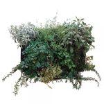 稳定植物画框 / 树叶 / 天然 / 室内