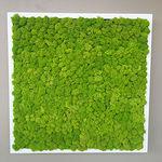 稳定绿植墙 / 模块化板 / 天然 / 室内