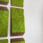 稳定绿植墙 / 模块化板 / 天然 / 苔藓