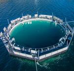 复合材料土工膜 / 用于水池 / 防水